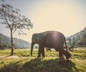 Chiang Mai: bästa tiden att åka